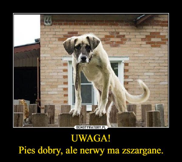 UWAGA!Pies dobry, ale nerwy ma zszargane. –