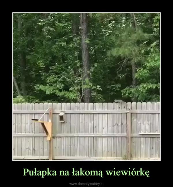 Pułapka na łakomą wiewiórkę –