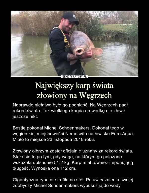 Największy karp światazłowiony na Węgrzech – Naprawdę niełatwo było go podnieść. Na Węgrzech padł rekord świata. Tak wielkiego karpia na wędkę nie złowił jeszcze nikt.Bestię pokonał Michel Schoenmakers. Dokonał tego w węgierskiej miejscowości Nemesvita na łowisku Euro-Aqua. Miało to miejsce 23 listopada 2018 roku.Złowiony olbrzym został oficjalnie uznany za rekord świata. Stało się to po tym, gdy waga, na którym go położono wskazała dokładnie 51,2 kg. Karp miał również imponującą długość. Wynosiła ona 112 cm.Gigantyczna ryba nie trafiła na stół. Po uwiecznieniu swojej zdobyczy Michel Schoenmakers wypuścił ją do wody