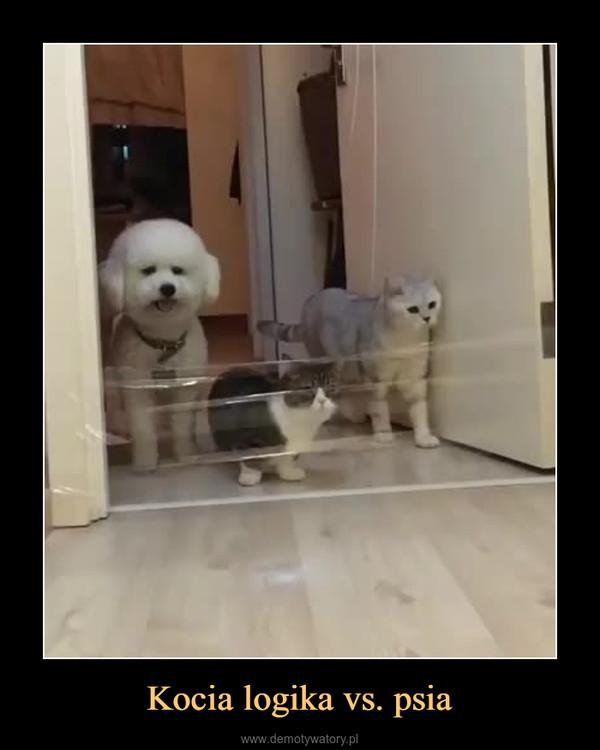 Kocia logika vs. psia –
