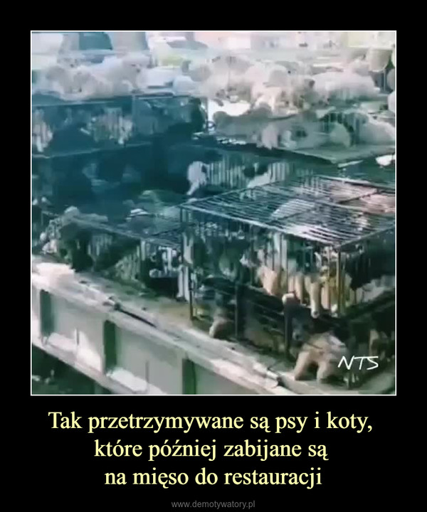 Tak przetrzymywane są psy i koty, które później zabijane są na mięso do restauracji –