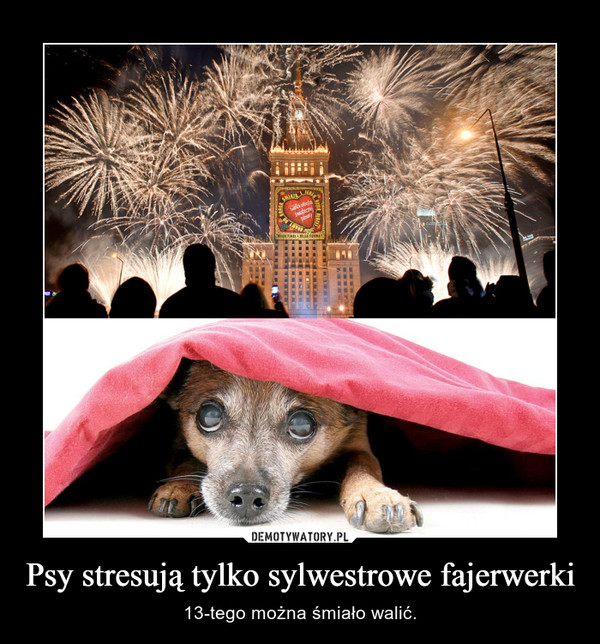 Psy stresują tylko sylwestrowe fajerwerki – 13-tego można śmiało walić.