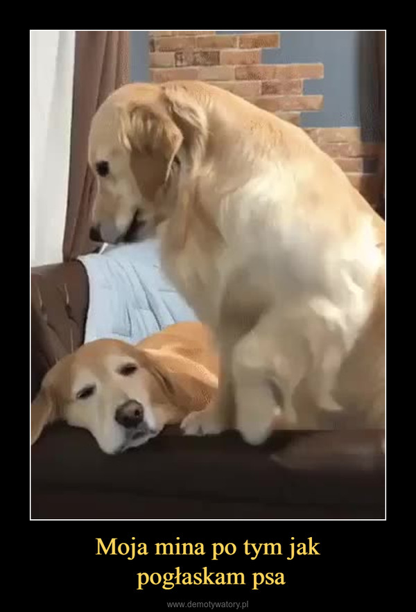 Moja mina po tym jak pogłaskam psa –