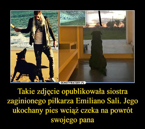 Takie zdjęcie opublikowała siostra zaginionego piłkarza Emiliano Sali. Jego ukochany pies wciąż czeka na powrót swojego pana –