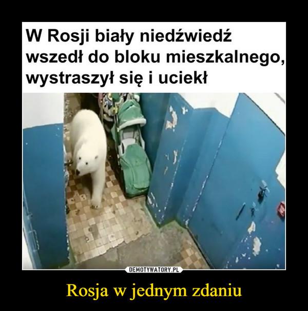 Rosja w jednym zdaniu –  W Rosji biały niedźwiedź wszedł do bloku mieszkalnego, wystraszył się i uciekł