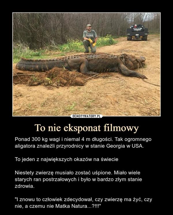 """To nie eksponat filmowy – Ponad 300 kg wagi i niemal 4 m długości. Tak ogromnego aligatora znaleźli przyrodnicy w stanie Georgia w USA.To jeden z największych okazów na świecieNiestety zwierzę musiało zostać uśpione. Miało wiele starych ran postrzałowych i było w bardzo złym stanie zdrowia.""""I znowu to człowiek zdecydował, czy zwierzę ma żyć, czy nie, a czemu nie Matka Natura...?!!!"""""""