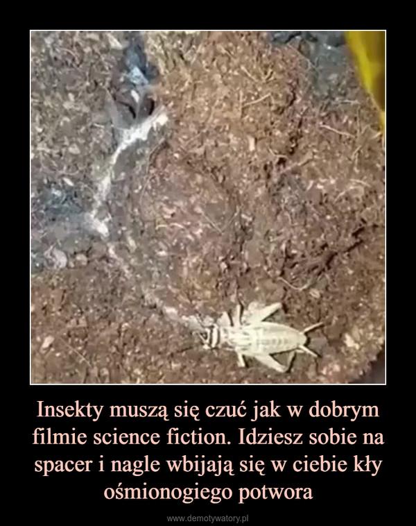 Insekty muszą się czuć jak w dobrym filmie science fiction. Idziesz sobie na spacer i nagle wbijają się w ciebie kły ośmionogiego potwora –