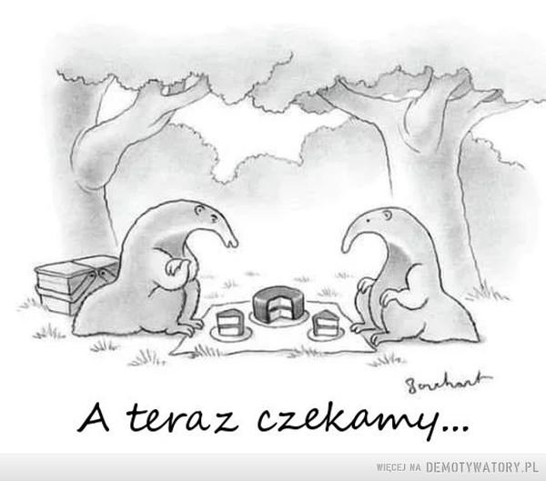Mrówkojady na pikniku –