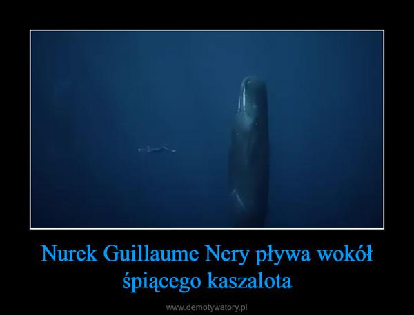 Nurek Guillaume Nery pływa wokół śpiącego kaszalota –