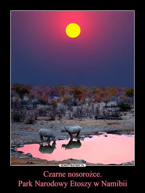 Czarne nosorożce. Park Narodowy Etoszy w Namibii
