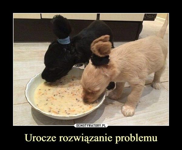 Urocze rozwiązanie problemu –