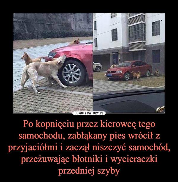 Po kopnięciu przez kierowcę tego samochodu, zabłąkany pies wrócił z przyjaciółmi i zaczął niszczyć samochód, przeżuwając błotniki i wycieraczki przedniej szyby –
