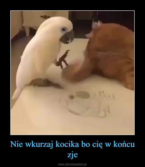 Nie wkurzaj kocika bo cię w końcu zje –