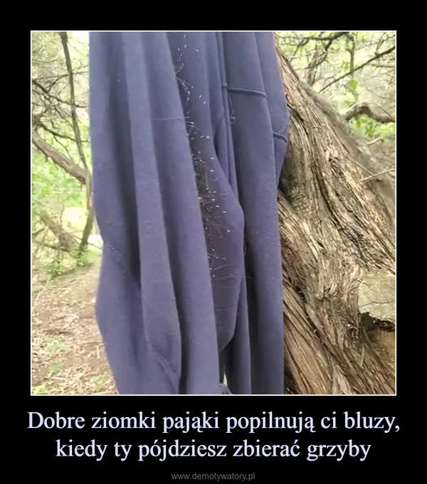 Dobre ziomki pająki popilnują ci bluzy, kiedy ty pójdziesz zbierać grzyby –