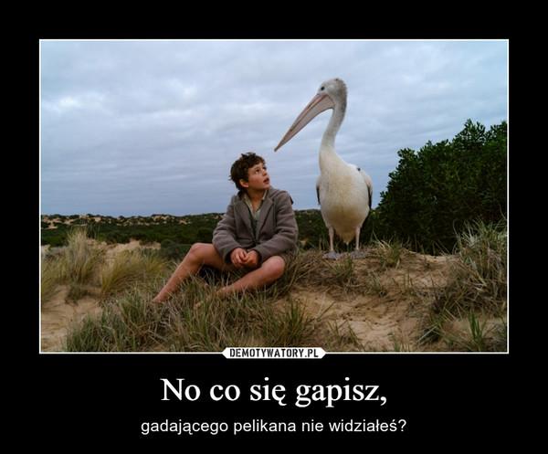 No co się gapisz, – gadającego pelikana nie widziałeś?