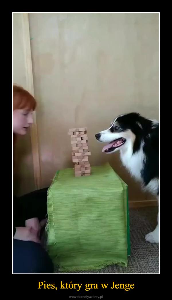 Pies, który gra w Jenge –