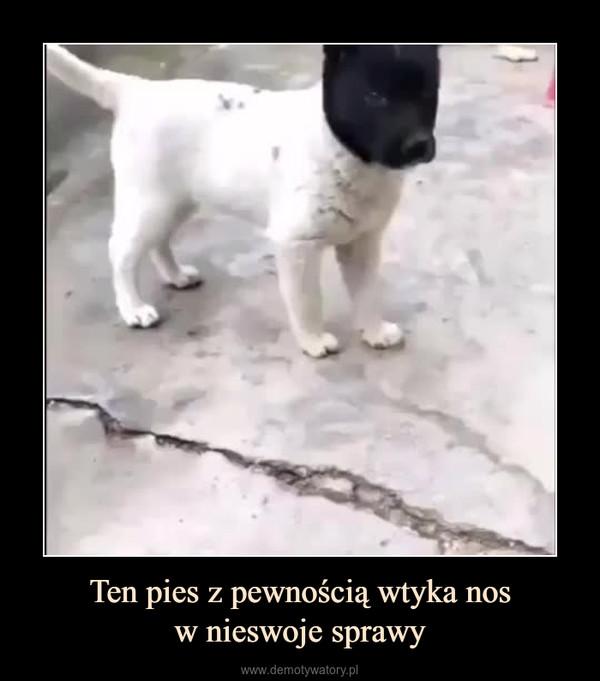 Ten pies z pewnością wtyka nosw nieswoje sprawy –