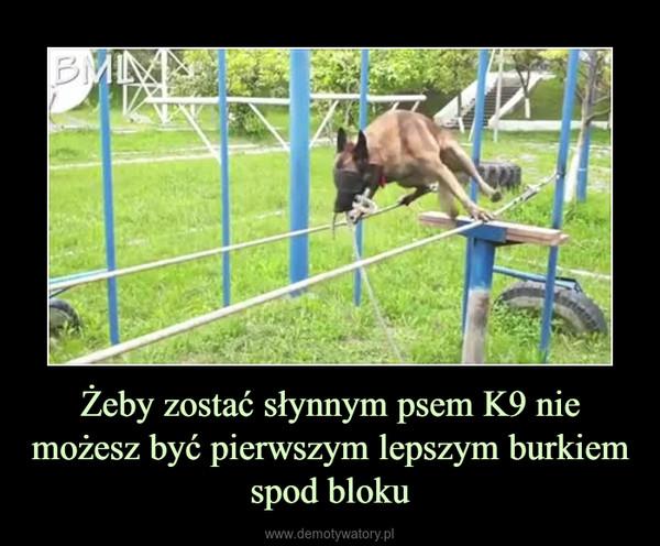 Żeby zostać słynnym psem K9 nie możesz być pierwszym lepszym burkiem spod bloku –