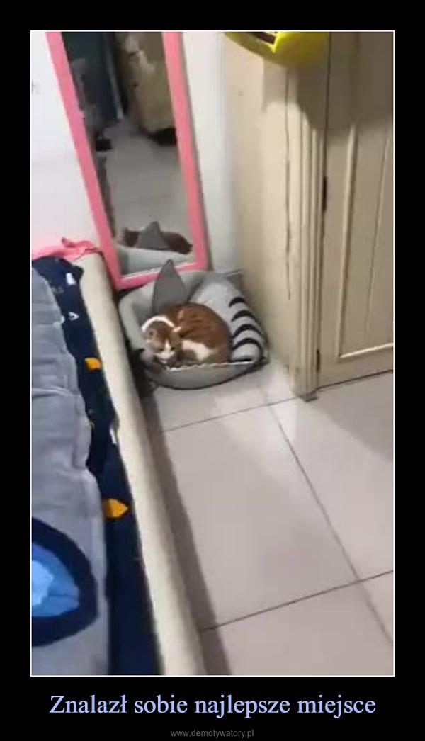 Znalazł sobie najlepsze miejsce –