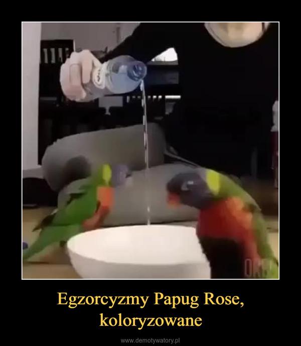Egzorcyzmy Papug Rose, koloryzowane –
