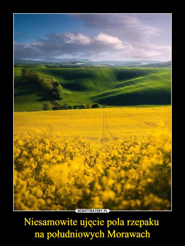 Niesamowite ujęcie pola rzepaku na południowych Morawach –