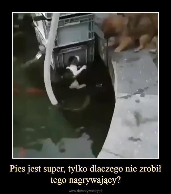 Pies jest super, tylko dlaczego nie zrobił tego nagrywający? –