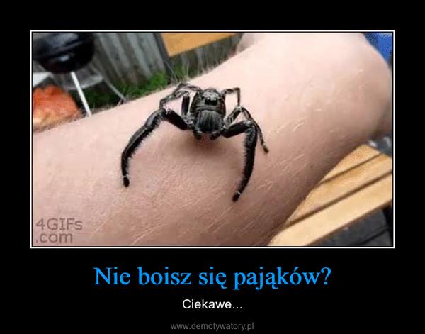 Nie boisz się pająków? – Ciekawe...