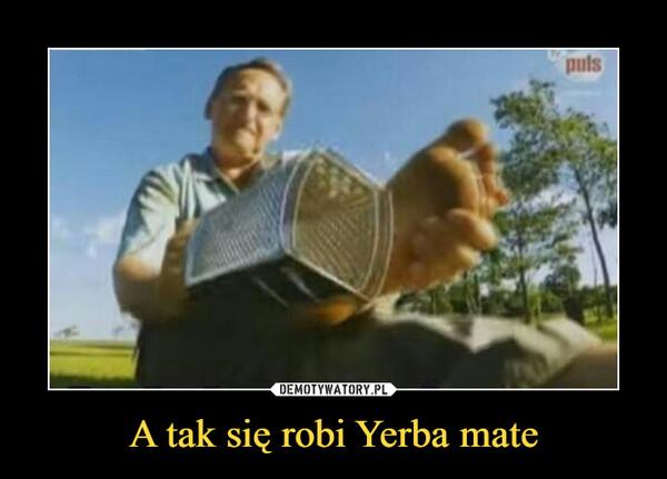 A tak się robi Yerba mate –