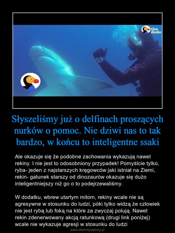 Słyszeliśmy już o delfinach proszących nurków o pomoc. Nie dziwi nas to tak bardzo, w końcu to inteligentne ssaki – Ale okazuje się że podobne zachowania wykazują nawet rekiny. I nie jest to odosobniony przypadek! Pomyślcie tylko, ryba- jeden z najstarszych kręgowców jaki istniał na Ziemi, rekin- gatunek starszy od dinozaurów okazuje się dużo inteligentniejszy niż go o to podejrzewaliśmy. W dodatku, wbrew utartym mitom, rekiny wcale nie są agresywne w stosunku do ludzi, póki tylko widzą że człowiek nie jest rybą lub foką na które za zwyczaj polują. Nawet rekin zdenerwowany akcją ratunkową (drugi link poniżej) wcale nie wykazuje agresji w stosunku do ludzi