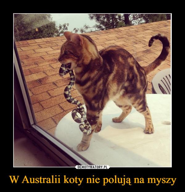 W Australii koty nie polują na myszy –
