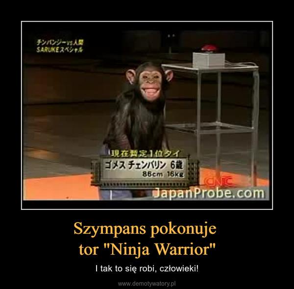 """Szympans pokonuje tor """"Ninja Warrior"""" – I tak to się robi, człowieki!"""