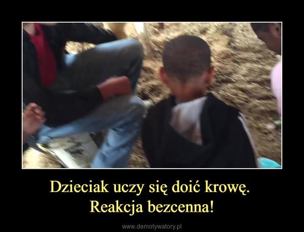 Dzieciak uczy się doić krowę. Reakcja bezcenna! –