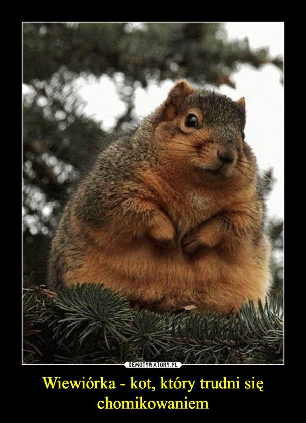 Wiewiórka - kot, który trudni się chomikowaniem –
