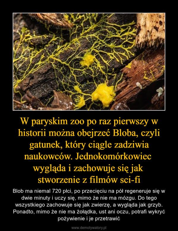 W paryskim zoo po raz pierwszy w historii można obejrzeć Bloba, czyli gatunek, który ciągle zadziwia naukowców. Jednokomórkowiec wygląda i zachowuje się jak stworzenie z filmów sci-fi – Blob ma niemal 720 płci, po przecięciu na pół regeneruje się w dwie minuty i uczy się, mimo że nie ma mózgu. Do tego wszystkiego zachowuje się jak zwierzę, a wygląda jak grzyb. Ponadto, mimo że nie ma żołądka, ust ani oczu, potrafi wykryć pożywienie i je przetrawić