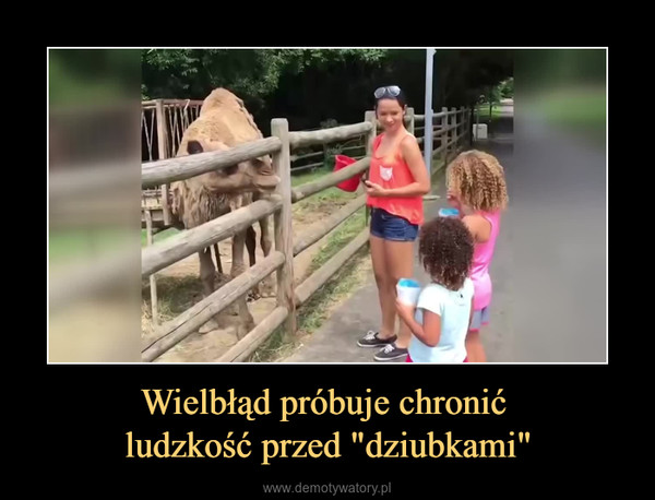 """Wielbłąd próbuje chronić ludzkość przed """"dziubkami"""" –"""