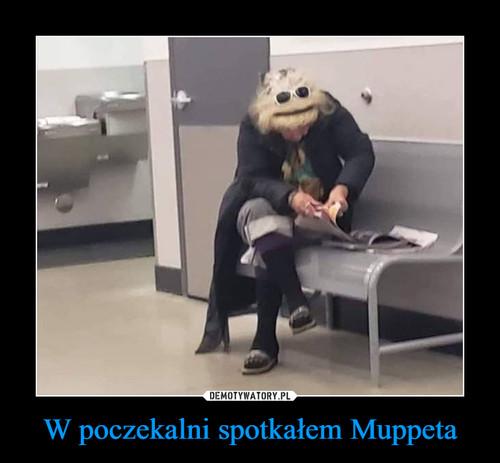 W poczekalni spotkałem Muppeta