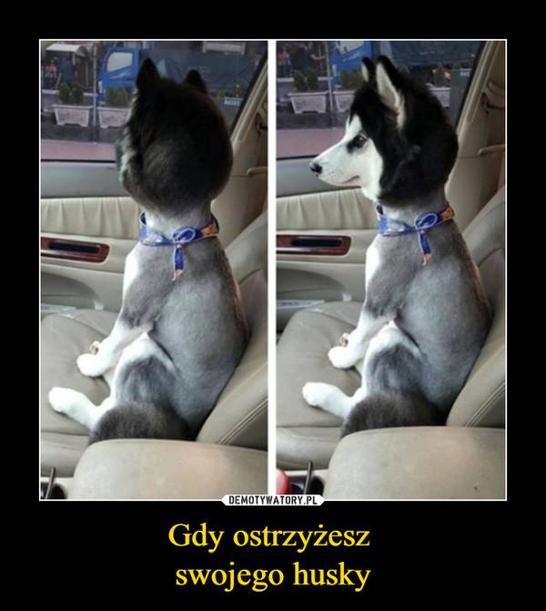 Gdy ostrzyżesz swojego husky –