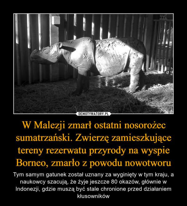 W Malezji zmarł ostatni nosorożec sumatrzański. Zwierzę zamieszkujące tereny rezerwatu przyrody na wyspie Borneo, zmarło z powodu nowotworu – Tym samym gatunek został uznany za wyginięty w tym kraju, a naukowcy szacują, że żyje jeszcze 80 okazów, głównie w Indonezji, gdzie muszą być stale chronione przed działaniem kłusowników