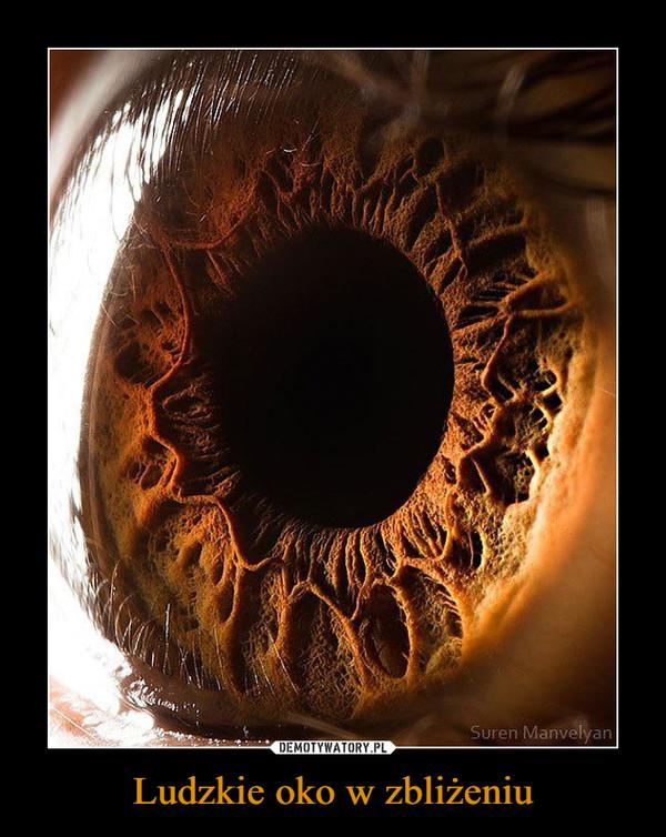 Ludzkie oko w zbliżeniu –