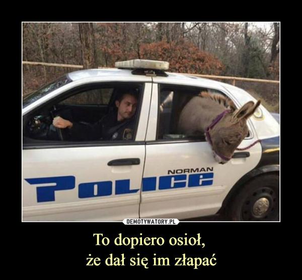 To dopiero osioł, że dał się im złapać –  Norman Police