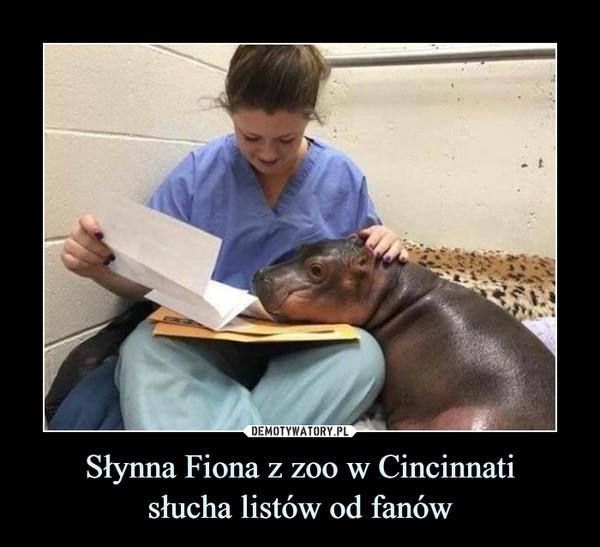 Słynna Fiona z zoo w Cincinnatisłucha listów od fanów –