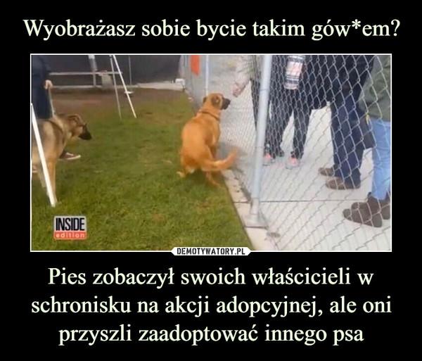 Pies zobaczył swoich właścicieli w schronisku na akcji adopcyjnej, ale oni przyszli zaadoptować innego psa –