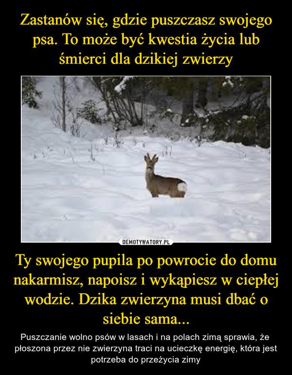 Ty swojego pupila po powrocie do domu nakarmisz, napoisz i wykąpiesz w ciepłej wodzie. Dzika zwierzyna musi dbać o siebie sama... – Puszczanie wolno psów w lasach i na polach zimą sprawia, że  płoszona przez nie zwierzyna traci na ucieczkę energię, która jest potrzeba do przeżycia zimy