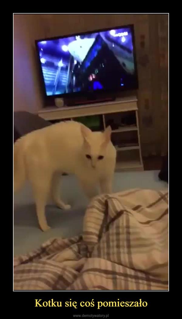 Kotku się coś pomieszało –