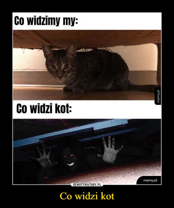 Co widzi kot –