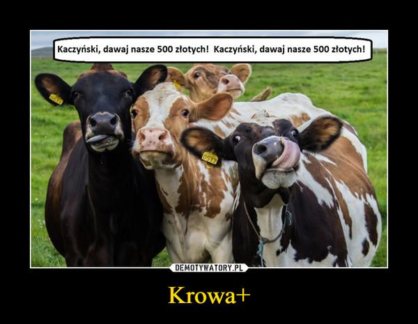 Krowa+ –