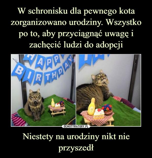 Niestety na urodziny nikt nie przyszedł –