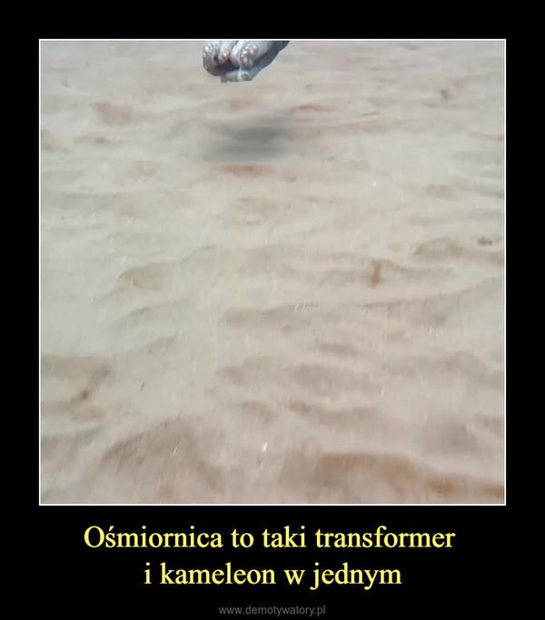 Ośmiornica to taki transformer i kameleon w jednym –