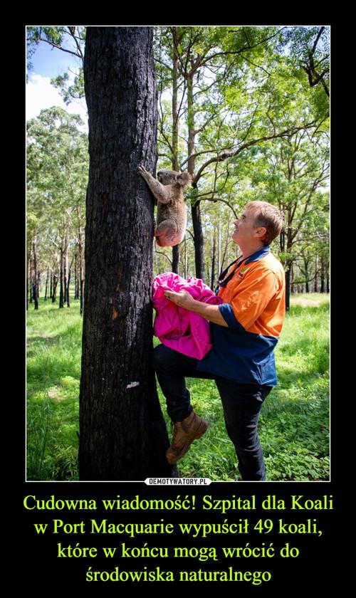 Cudowna wiadomość! Szpital dla Koali w Port Macquarie wypuścił 49 koali, które w końcu mogą wrócić do środowiska naturalnego
