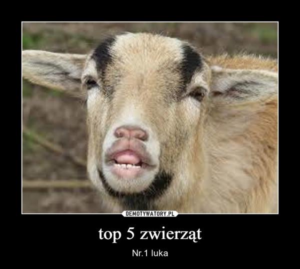 top 5 zwierząt – Nr.1 luka